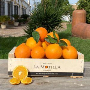 Comprar naranjas de mesa desde el árbol